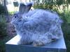 Mischievous_bunnies_002
