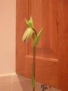 Orchids_007