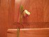Orchids_010