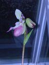 Orchids_048