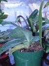 Orchids_066_1