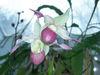 Orchids_075