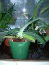 Orchids_078