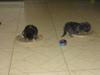 Weaning_kittens_004